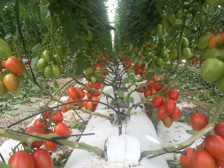 Sistemas de cultivo sin suelo revista infoagro m xico for Que es una mesa de cultivo