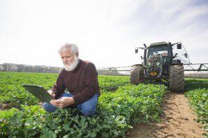 Rolf Schmidt, Agrarwissenschaftler bei Bayer, wendet die Daten vom Digital Farming-System auf einem deutschen Rapsfeld an. Bayer agronomist Rolf Schmidt uses the data of Digital Farming System in a German oilseed rape field.