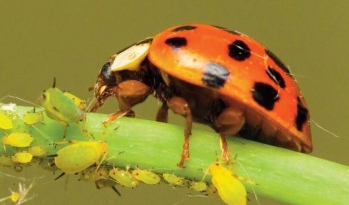 Resultado de imagen para CONTROL BIOLÓGICO