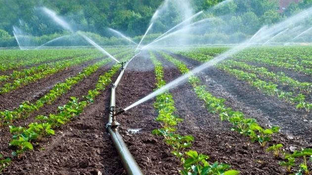 Necesidades de agua de riego | Revista Infoagro México