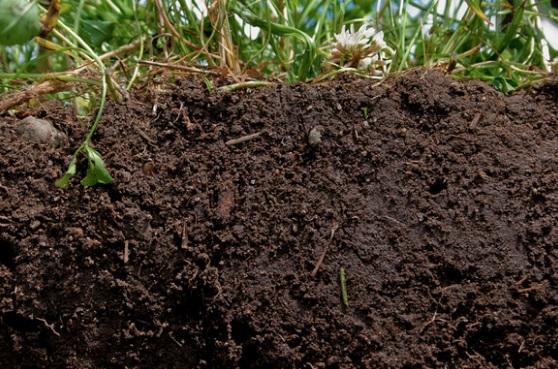 Microorganismos del suelo de gran beneficio para los cultivos ...